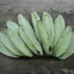 ash plantain